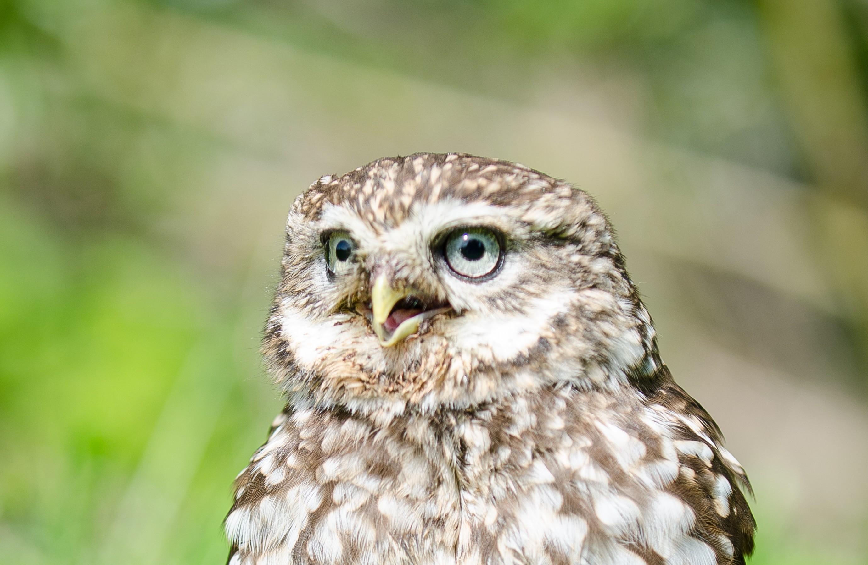 Central England Bird of Prey Sanctuary
